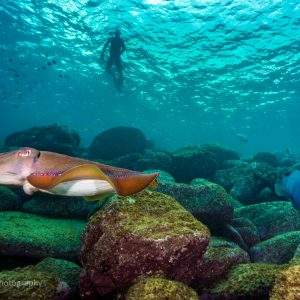 Swimming at Cabbage Tree Bay Aquatic Reserve