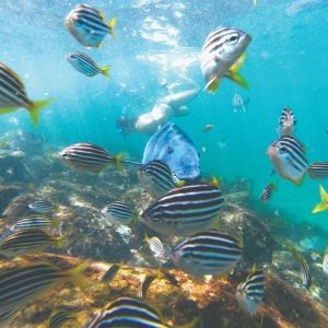 Best Places to Snorkel in Sydney