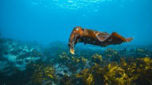 Snorkeling in Sydney