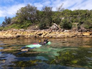 Snorkeling in Manly