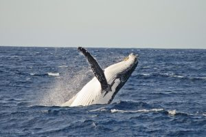 Whale watching in Northern Beaches in Winter